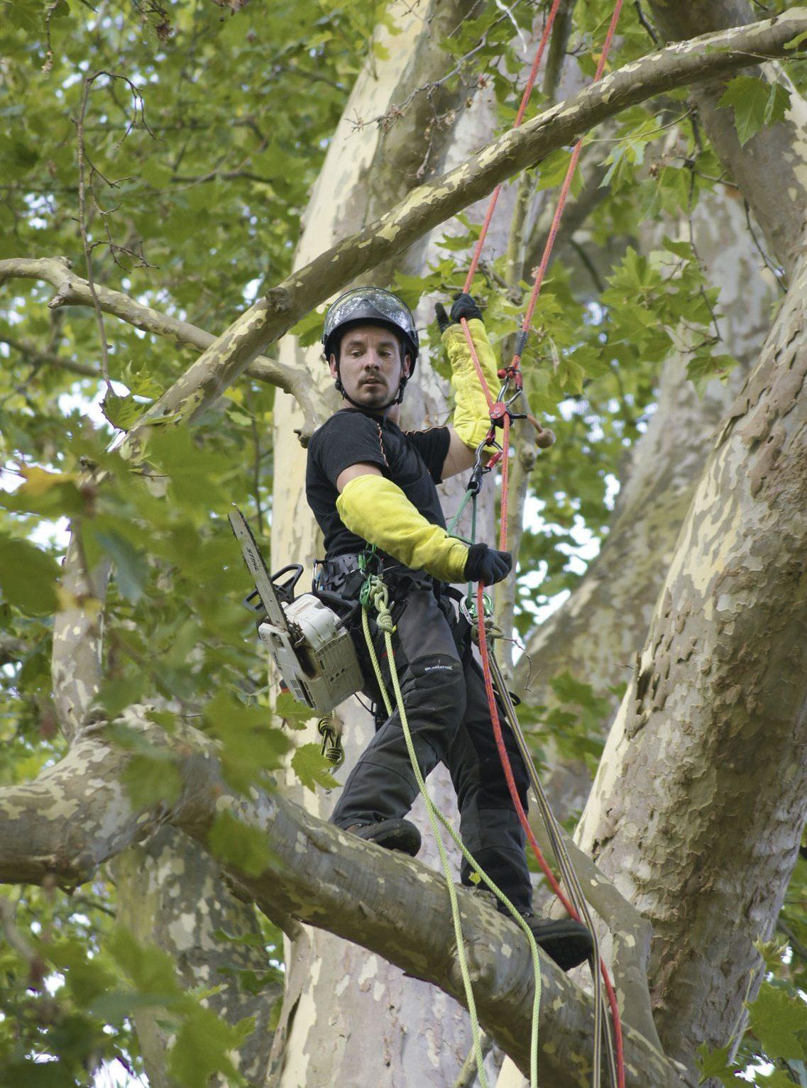Creavert, élagage de vos arbres