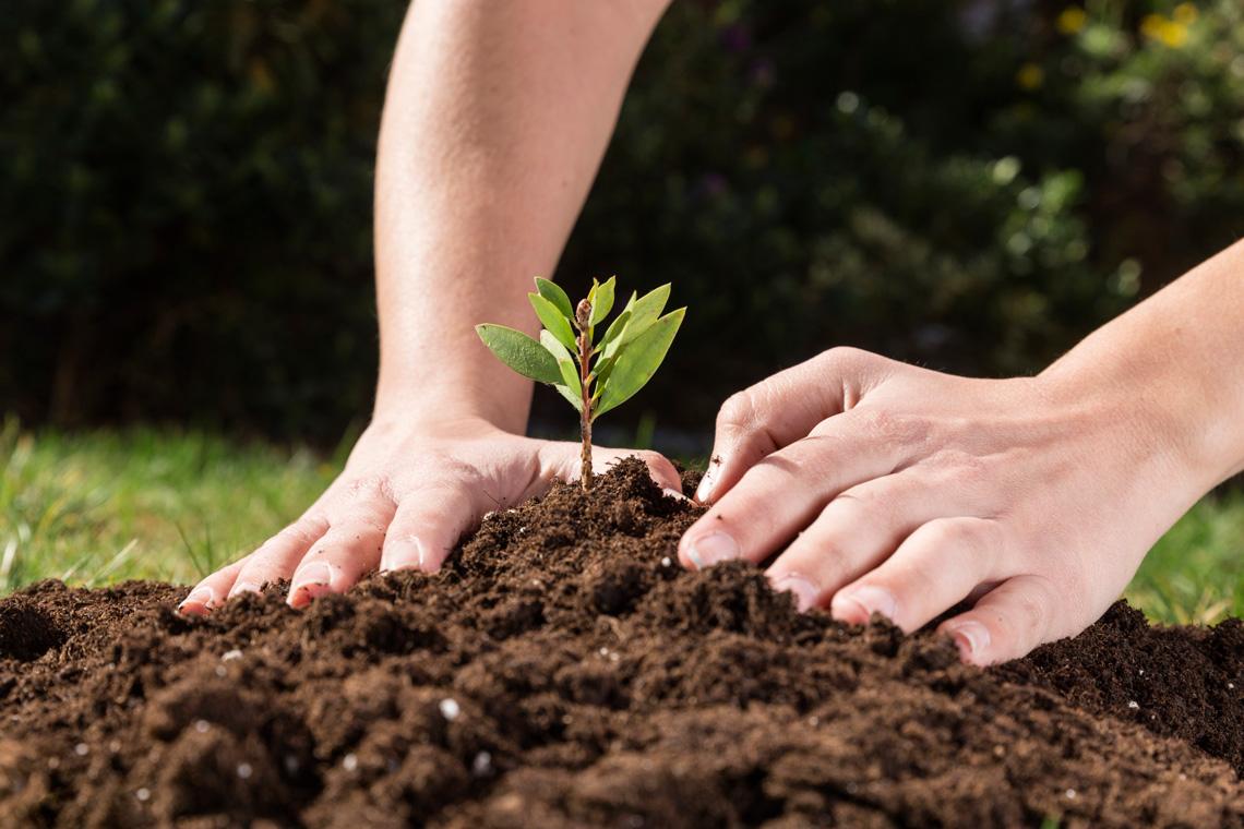 Créavert s'occupe de vos plantations